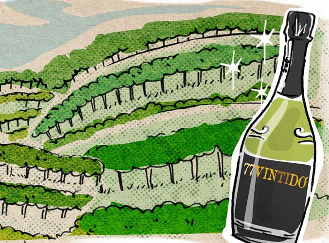 77vintido | Selezione di vini rari di collina