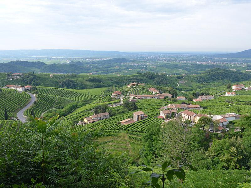 77vintido | Valdobbiadene's territory of Prosecco