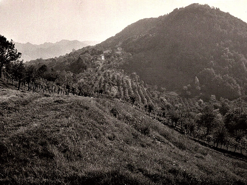 77vintido | Vineyard Balbi 1977 | Background history of Prosecco